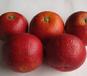 红色外皮多汁血橙