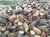贵州鹅卵石贵州黑色鹅卵石扁鹅卵石