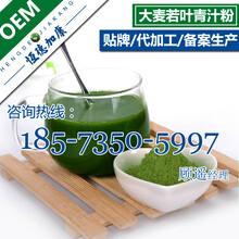 大麦若叶青汁粉代加工青汁酵素粉oem贴牌生产