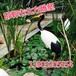 水禽雕塑,仿真水禽雕塑廠,邯鄲市北方雕塑!