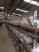 湖北肉兔養殖技術,野兔肉兔回收,提供野兔種兔