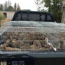 湖北散养野兔包技术包回收厂家直销