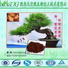 松树皮提取物松树皮提取物原花青素OPC95优质保健品化妆抗氧化剂