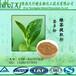 绿茶提取物茶多酚40厂家直供绿茶天然成分茶多酚40最新茶多酚价格
