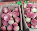 东莞下桥水果批发市场