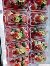 批发收购长丰草莓