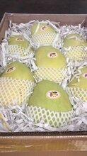 广州最大的水果批发市场在哪里图片