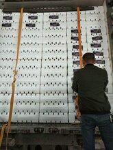 广州江南水果批发市场代卖图片