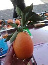 水果批發市場行情好不好圖片