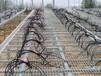 温室苗床网大棚花架网蘑菇网镀锌网格生产厂家