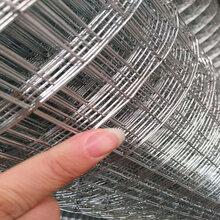 供應不銹鋼304電焊網/低碳鋼絲焊接網/PVC包塑電焊網