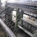 铄凯专业生产镀锌铁丝六角网,PVC包塑养殖拧花网,平纹编织拧花网,养殖六角铁丝网