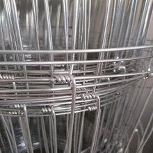 厂家直销动物围栏网,养殖铁丝网,价格实惠