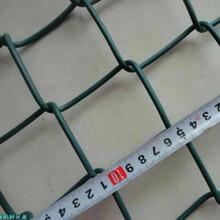 厂家生产销售菱形勾花网,球场勾花网,价格便宜图片