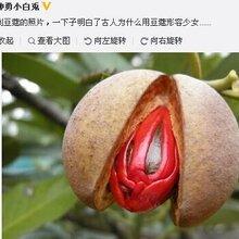 美国韩国农产品进口代理报关报检相关问题青岛巨晖为您解答