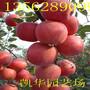 锦绣红苹果苗介绍锦绣苹果苗多少钱,锦绣红苹果苗介绍图片