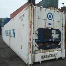 广州集装箱,冷藏集装箱出售,冷冻集装箱价格图片