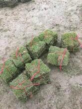 草皮价格,草皮介绍,草皮的种植