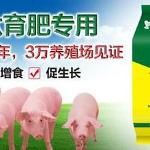 猪喂什么长得快养猪三个月出栏秘方养殖日长三斤秘方图片