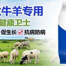 育肥牛饲养方法牛吃什么上膘快肉牛催肥增重王图片