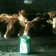 牛吃什么长得最快,怎么样养牛长的快图片