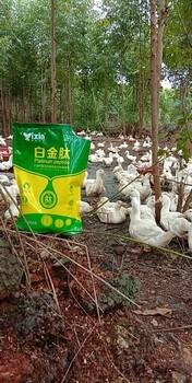 肉鸭吃什么长的快肉鸭催肥药肉鸭如何快速长肥