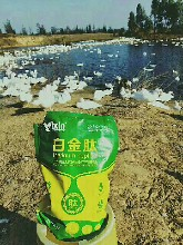 肉鸭催肥药肉鸭吃什么长得快肉鸭催肥增重王图片