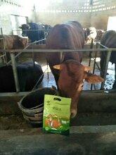 肉牛吃什么长得快牛羊催肥添加剂瘦牛催肥用什么药图片