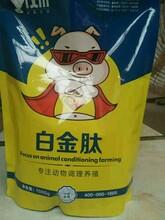 小猪吃什么饲料长得快仔猪吃什么长得快图片