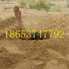 科达自产自销植树挖坑机多型号挖坑机质保图片