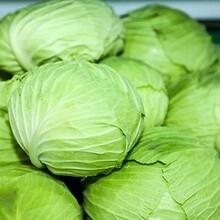 高明区蔬菜配送图片