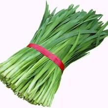 番禺区生鲜蔬菜配送中心图片