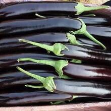 海珠区蔬菜配送价格图片