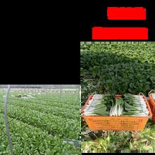 白云区生鲜食材配送中心图片