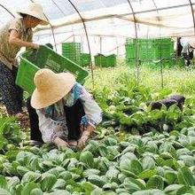 从化有机蔬菜配送中心图片