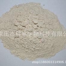 厂家提供玉米粉饲料原料高脂肪饲料原料高蛋白饲料原料