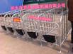 母猪保胎限位栏一组十个母猪槽母猪定位栏价格