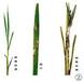施达优专供99磷酸二氢钾施促穗肥99磷酸二氢钾含量磷酸二氢钾使用水稻高产农肥