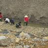 格宾石笼生态护岸格宾石笼厂家