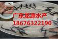 桂花鱼,鳜鱼苗,季花鱼,花鲫鱼