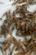 澳洲淡水龙虾苗批发