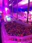 山西大型燈光展出租,積木樂園出租,呼吸燈出租圖片