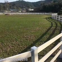 PVC馬場護欄隔離跑馬場馬場圍欄牧場圍欄易清洗長新不舊圖片