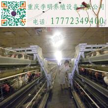 阶梯式喂料机养殖设备喂料机养鸡喂料机行车式喂料机