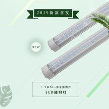 承越家用级2019新LED植物生长日照灯条花卉多肉盆栽光合作用补光灯