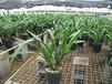 苏州花卉租赁、办公室花卉出租、绿化养护