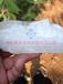 海南硅肥325目供应有机硅肥生物硅肥西瓜专用硅肥Sio2>98%