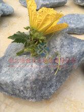 江苏苏州硅肥供应生物硅肥有机硅肥葡萄专用硅肥100目Sio2>98%图片