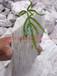SIO249.8%1250目硅钙肥高含量水溶硅钙肥厂家直供微量元素硅钙肥