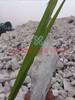 郑州硒金农业TIO20.01%硅钙肥600目有效硅Sio>21.6%